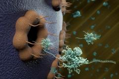 Cytoplasma nucleus with RNA knots