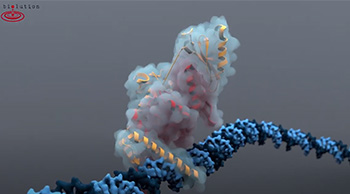 Hypoxia inducible factor-1apha (HIF-1a) in a complex with ARNT on DNA // Video