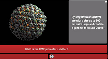 What do you know about Viruses? Quiz // Video