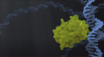 conformational changes of proto-oncogene p53 // Video